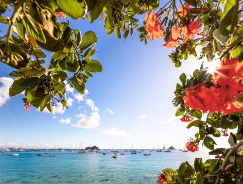 sea and flowers of St Barts