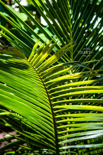 Tropical forest in St Barts